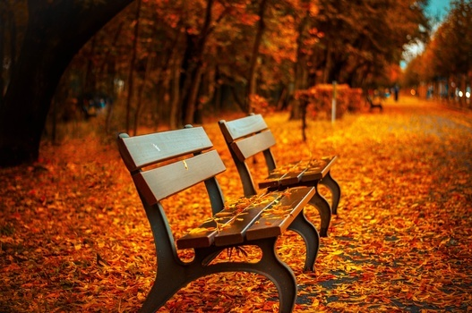Healthy Habits for Seniors in Fall